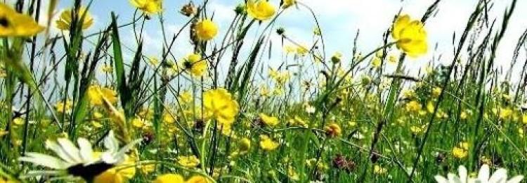 «Красота растений» — рассказ для 2 класса по окружающему миру
